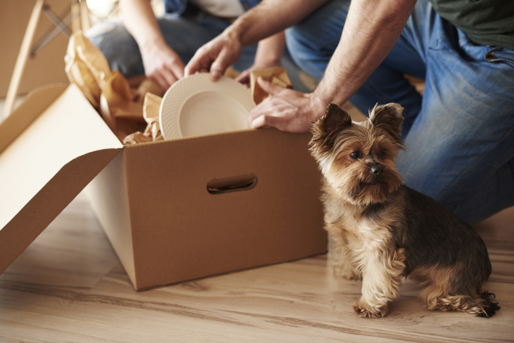 couple packing moving box, small cute dog