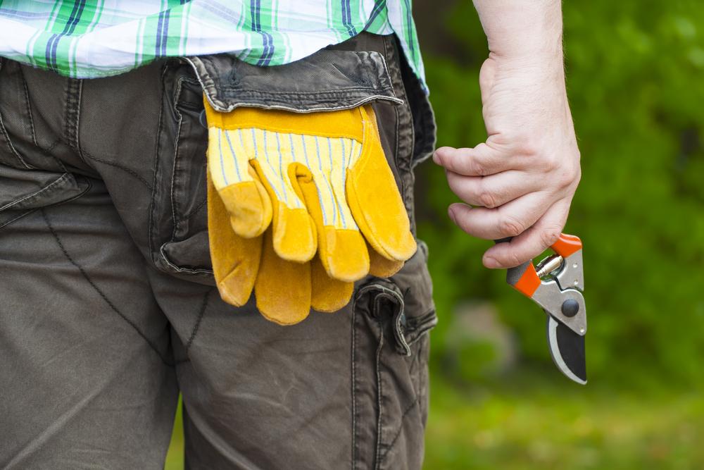man holding gardening shears, gardening gloves in back pocket